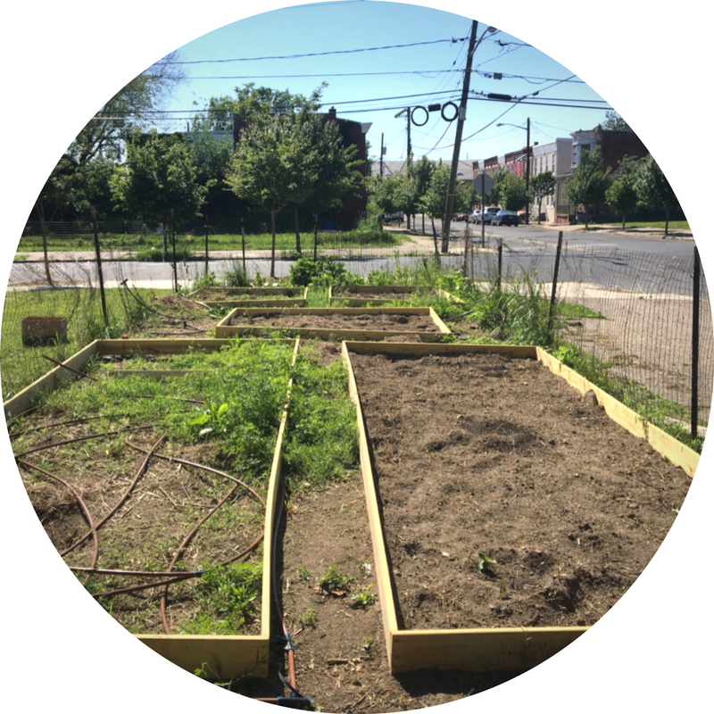 Students Harvest Success by Taking on a City's Food Desert