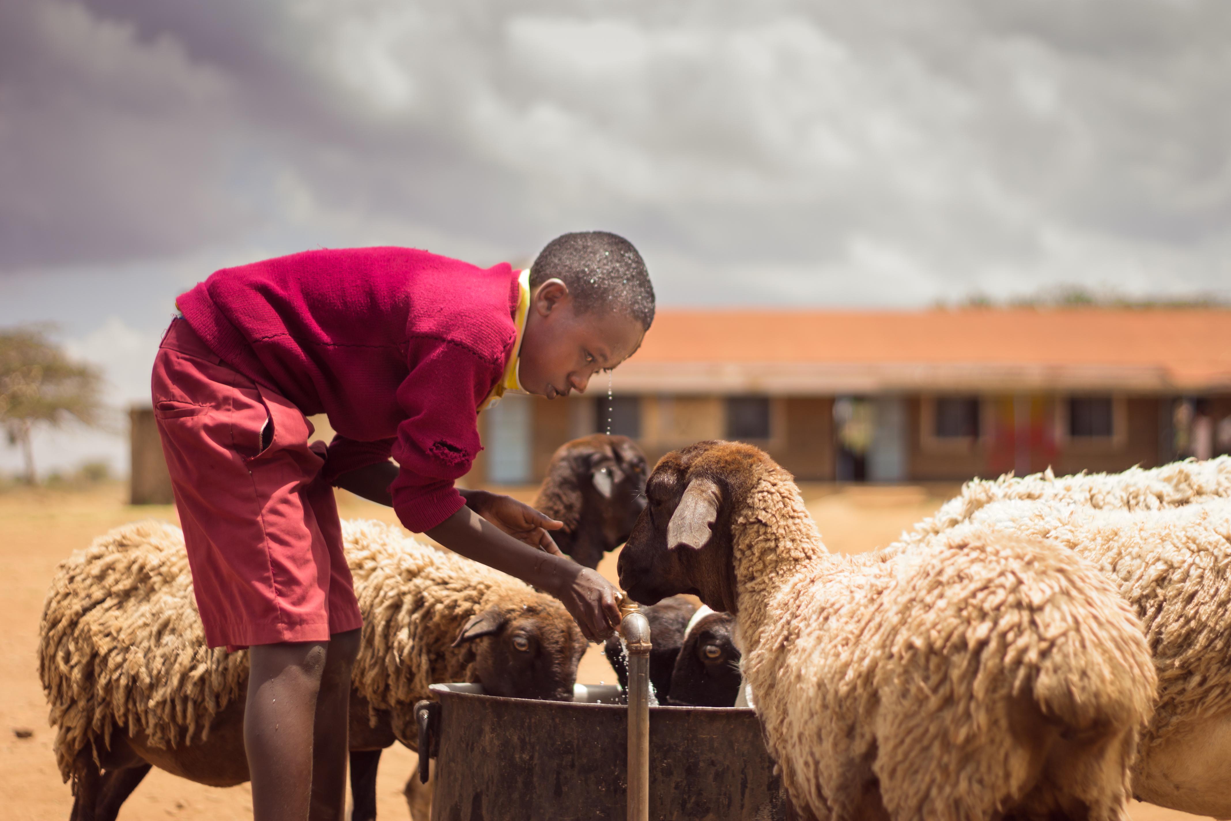 boy-with-sheep-1